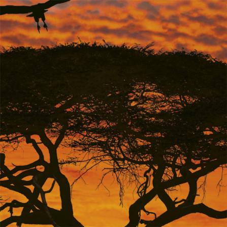 Komar Фотообои African Sunset 194х270